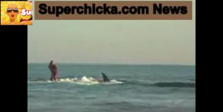 Wellenreiten Out   Sharksurfing an US-Küsten jetzt im Trend